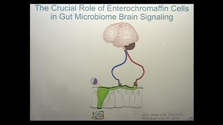Download The Microbiome Mind and Brain Interactions Video
