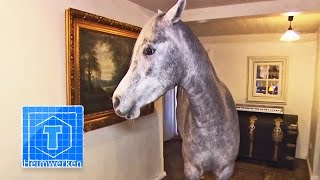 Download Haus-Pferd | Tiere | ToolTown Video