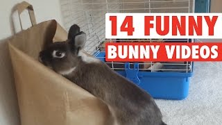 Download 14 Funny Bunny Videos || Awesome Bunnies Compilation Video