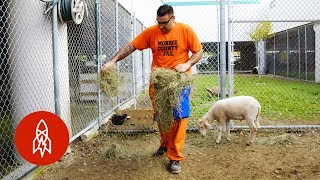 Download The Zoo Run By Inmates Video