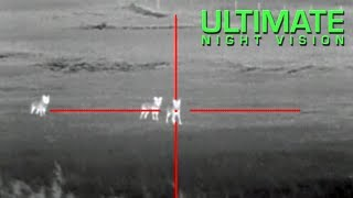 Download Coyote Hunting with Thermal - 13 Coyotes Down with the ATN ThOR Thermal Scope Video