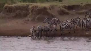 Download Safari Live : James and Graham in Kenya as seen on drive this afternoon Aug 29, 2016 Video