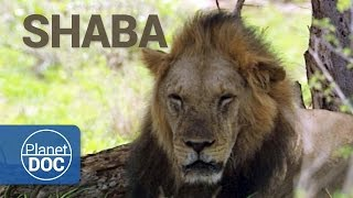 Download Full Documentary. Shaba. The Land of God and Devil Video