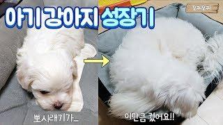 Download 아기 강아지 1년동안의 성장기♥ 뽀시래기가 벌써 이만큼이나 컸어요! Video