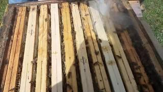 Download Jak Rozpocząć Przygodę z Pszczołami.....! Video