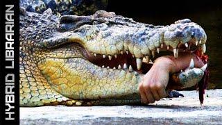 Download World's 7 Most Dangerous Animals Video