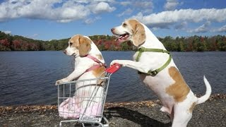Download Dogs' Epic Shopping Cart Voyage: Funny Dogs Maymo & Penny Video