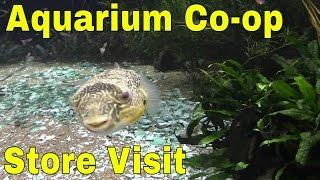 Download Aquarium Co-op Fish Store Tour Video