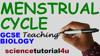 Download Menstrual Cycle (Basic & 4 stages), GCSE SCIENCE BIOLOGY Video