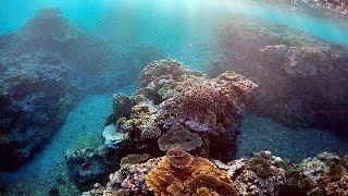 Download Australien: Korallensterben am Great Barrier Reef weitet sich dramatisch aus Video