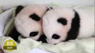 Download The first 100 Days of Mei Lun and Mei Huan Video