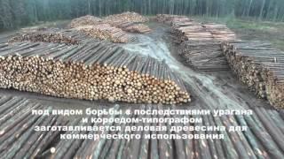 Download ФИЛЬМ Уничтожение защитных лесов на ЦВКП Video
