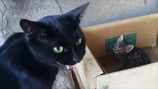 Download Mom cat talking to her kittens Video