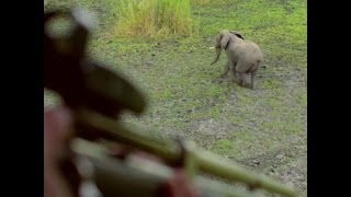 Download 500 Elephants Moved Away From Poachers Video
