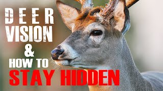 Download Deer Vision: How it Works and How to Stay Hidden Video