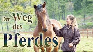 Download Der Weg des Pferdes - Dokumentarfilm - Deutsch Untertitel Video