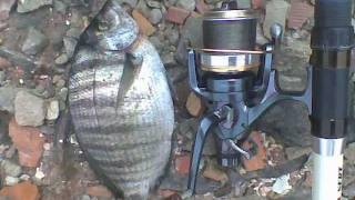 Download Best of 2011 Surfcasting en Algérie Part 02 Video