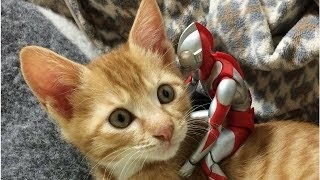 Download After A Family Rescued This Orphaned Newborn Kitten, They Gave Him The Most Unlikely Protector Video