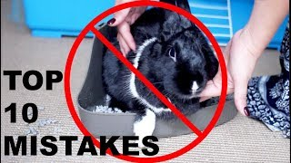 Download TOP 10 MISTAKES RABBIT OWNERS MAKE Video
