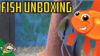 Download Mini Fish Unboxing! Daily Dose #19 Video