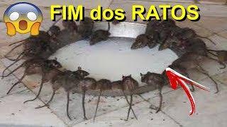 Download RATOEIRA ELÉTRICA MATA TODOS OS RATOS (SE INSCREVA NO CANAL PARTICIPE DOS SORTEIOS DOS INSCRITOS) Video