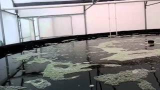 Download Acuaponia. Modelo comercial Bendagüii I Video