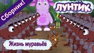 Download Жизнь муравьёв 🐜 Лунтик 🐜 Сборник мультфильмов 2018 Video