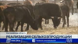 Download Жители села Танабай Костанайской области объединяются в кооперативы Video