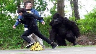 Download Classic Gorilla In Real Life Hidden Camera Prank Video