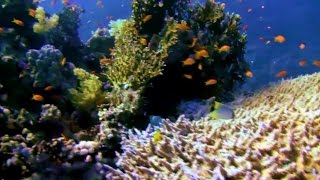 Download Underwater - Journey to the Red Sea Coral Reef Video