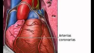 Download Angioplastia coronaria transluminal percutánea ACTP Video