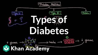 Download Types of diabetes | Endocrine system diseases | NCLEX-RN | Khan Academy Video