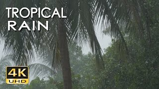 Download 4K Tropical Rain & Relaxing Nature Sounds - Ultra HD Nature Video - Sleep/ Relax/ Study/ Meditate Video