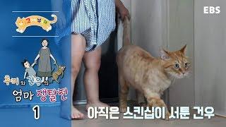 Download 고양이를 부탁해 - 루미와 건우의 엄마 쟁탈전 #001 Video