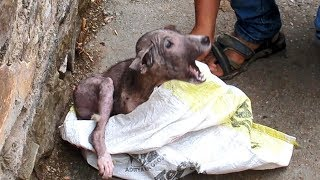 Download Terrified & in pain, puppy's amazing transformation after rescue Video