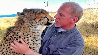 Download Man Reunites With African Cheetah BIG Cat After 1 Year Absence - Do You Remember Me? A Documentary Video