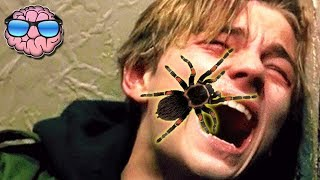 Download Top 10 MOST DANGEROUS Spiders In The WORLD! Video