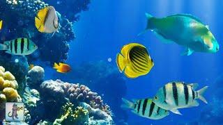 Download 2 Hours of Beautiful Coral Reef Fish, Relaxing Ocean Fish, & Stunning Aquarium Relax Music 1080p HD Video