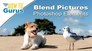 Download Photoshop Elements Blending Pictures : How to Combine Animals in Photo 2018 15 14 13 12 11 Tutorial Video