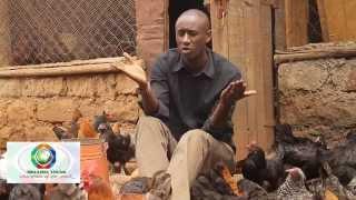 Download Mkulima Young Champion - Former journalist Sh 800,000 kienyenji chicken empire Video