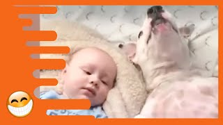 Download Naughty Dogs and Babies are the Best Friends - Best Baby Videos Video