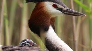 Download Birds of Russia 2 Video