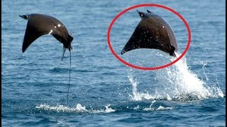 Download 15 Animals You Didn't Know Could Fly Video