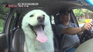 Download 170916 TV조선 파트라슈 [아빠를 구한 막둥이] 편 Video