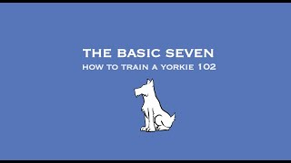Download How to Train a Yorkie 102: the Basic Seven pt.1 Video
