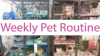 Download Weekly Pet Routine | Kaileys Pet Care 2017 Video