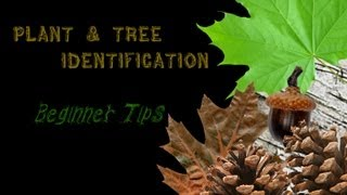 Download Beginner Tips for Plant ID Video