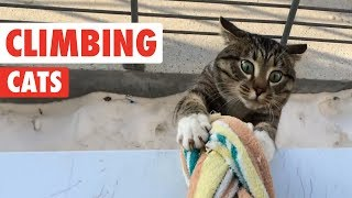 Download Climbing Cats | Funny Cat Compilation 2017 Video