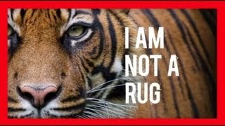 Download Stop Wildlife Crime: The Series - Tigers (Video 3) | WWF Video