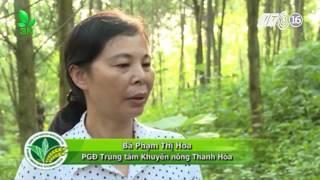 Download Kỹ thuật trồng rừng thâm canh cây keo lai Video